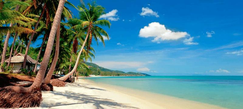 תמונת נוף חוף ים עם עצי קוקוס בתאילנד