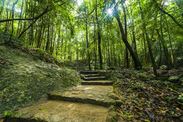 תמונה של יער גשם בקופנגן